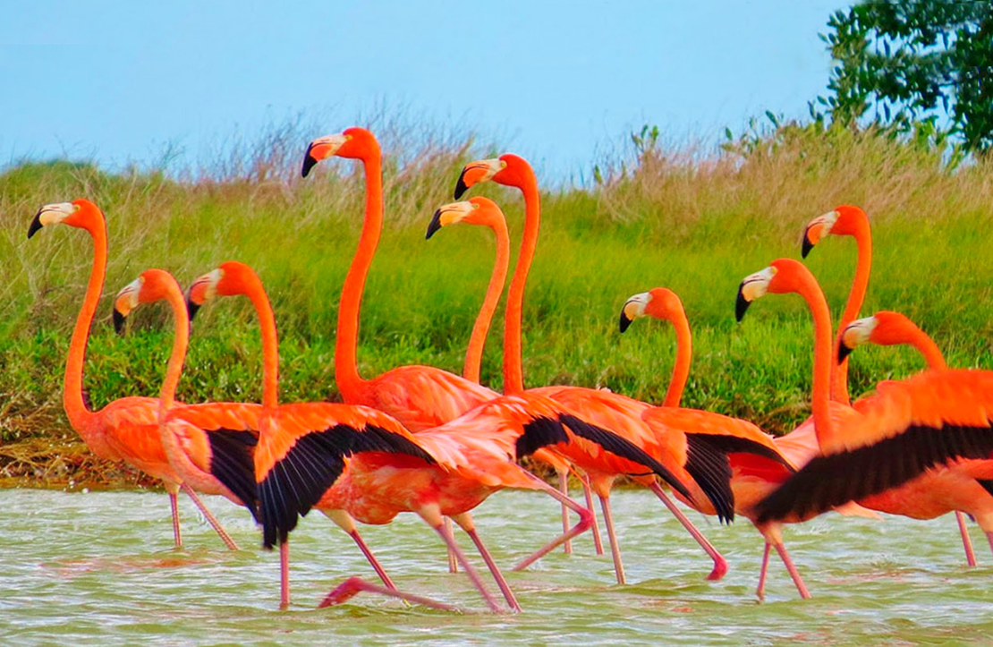 Tour Las Coloradas  | Cancun City & Tours